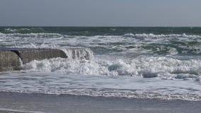 morze czarne odie zbiory