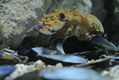Morze Egejskie ssaki patrzeje kamerę Zdjęcie Royalty Free