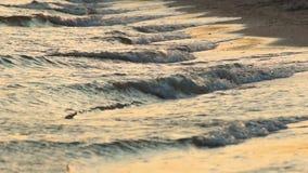 Morze fala przy zmierzchem, piaskiem, plażą i podróży pojęciem, - lato zbiory