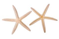 Morze gwiazda Zdjęcia Royalty Free