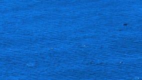 Morze i delfiny zdjęcie wideo