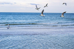 Morze i frajery Fotografia Stock