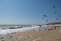 Morze i gołębie Fotografia Royalty Free
