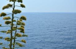 Morze i roślina Obraz Stock