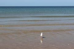 Morze i Seagull Fotografia Royalty Free