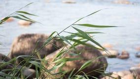 Morze i trawa Zdjęcie Stock