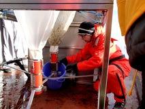 Morze Japonia, Rosja, Grudzień/- 01 2013: Brać próbkę od epibenthic saneczki sieci Obrazy Stock