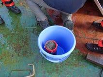 Morze Japonia, Rosja, Grudzień/- 01 2013: Próbka brać z epibenthic saneczki Fotografia Royalty Free