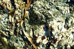 morze kamień Zdjęcia Stock