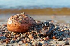Morze kamienie, kamienie od morza, kamienie różny rozmiar i kolor, duzi i mali, Fotografia Royalty Free