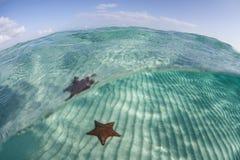 Morze Karaibskie gwiazda 3 Obrazy Royalty Free