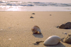 Morze koral na plaży i skorupy Fotografia Royalty Free