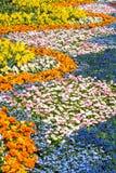 morze kwiatów Obrazy Royalty Free