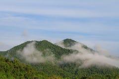 Morze mgła z lasami jako przedpole obraz stock