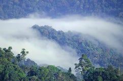 Morze mgła z lasami jako przedpole fotografia stock