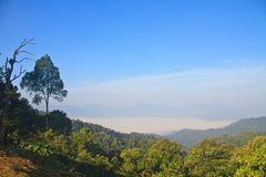 Morze mgła z lasami jako przedpole zdjęcia stock