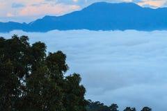 Morze mgła z lasami jako przedpole zdjęcia royalty free