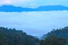 Morze mgła z lasami jako przedpole obrazy stock
