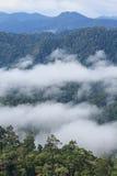 Morze mgła z lasami jako przedpole obraz royalty free
