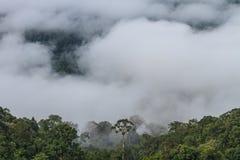 Morze mgła z lasami jako przedpole obrazy royalty free