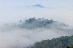 Morze mgła z lasami jako przedpole zdjęcie royalty free