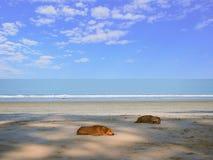 Morze, niebo i plaża, Zdjęcia Royalty Free