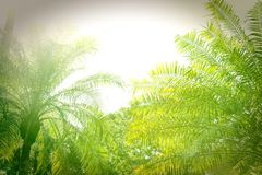 Morze palmy zdjęcia stock