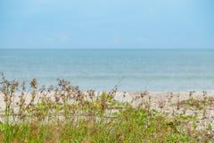 Morze plaża z zieloną trawą Zdjęcie Royalty Free