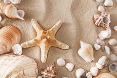 Morze plażowy piasek, seashells tło, naturalni seashore kamienie i rozgwiazda, royalty ilustracja