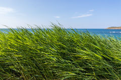 Morze przez trawy Fotografia Stock