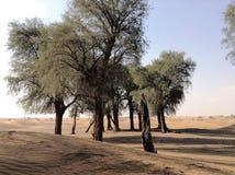 Morze, pustynia, Abudhabi, UAE, Dubaj Fotografia Stock