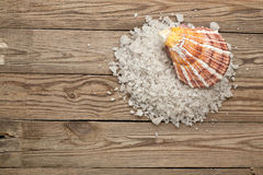 Morze skorupa na drewnie i sól zdjęcia royalty free