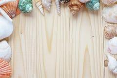 Morze skorupy na drewnianym tle Obraz Royalty Free