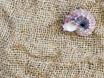 Morze skorupy na jasnopopielatej tkaninie zdjęcie royalty free