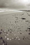morze skorupy plażowych Zdjęcie Stock