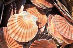 Morze skorupy w Pomorie, Bułgaria Zdjęcie Stock