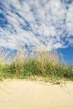 morze trawy Zdjęcia Stock