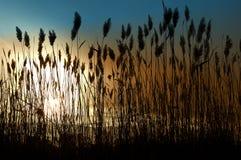 morze trawy Zdjęcie Royalty Free