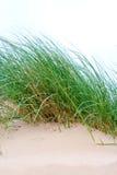 morze trawy kępy Obraz Royalty Free