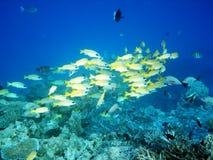 morze tropikalny Obrazy Stock