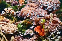 morze tropikalny Fotografia Royalty Free
