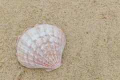 Morze ?uska na piasku z kopii przestrzeni? dla teksta obraz stock