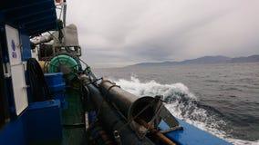 morze widzii obrazy royalty free