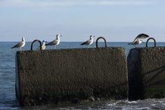 Morze z seagulls i betonowymi blokami fotografia stock