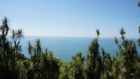 Morze za drzewami Obrazy Stock