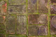 Mos на влажной кирпичной стене Стоковые Фотографии RF