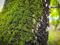 Mos на 3 в лес Стоковое Фото