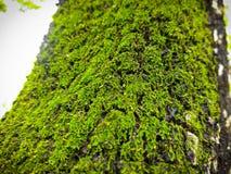 Mos на дереве в лес стоковое изображение