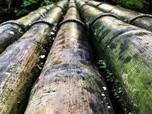 Mos on Bamboo Road. Spring Season. Bamboo Background. Transportion Royalty Free Stock Photography