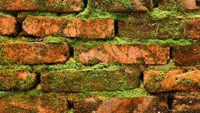 Mos behandelde bakstenen muur Royalty-vrije Stock Fotografie